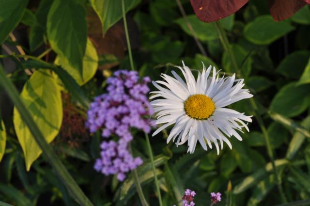 5 juillet : une ou des fleurs Dsc_0018