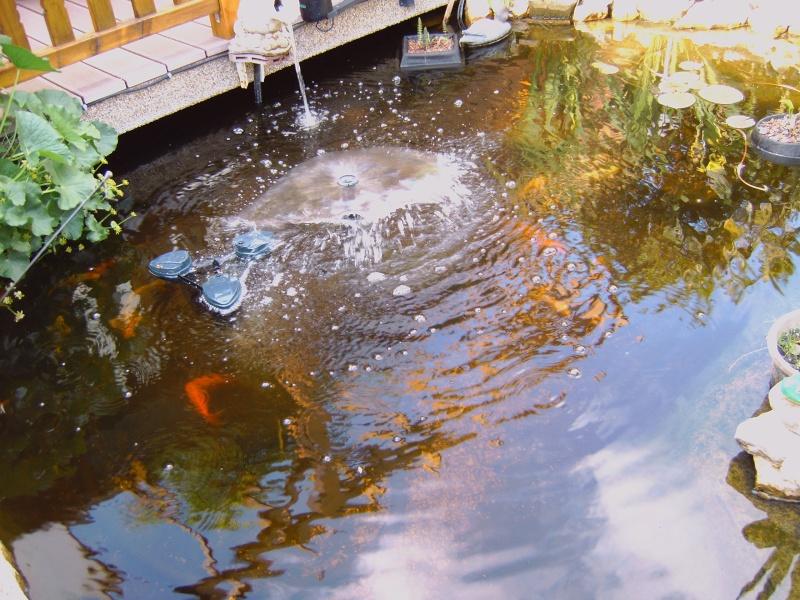 mon bassin Img00025