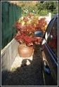 [Concours interne] Photo du mois ! [Novembre 2010] Dsc02715