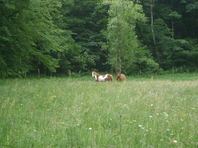 WALANIE (VANILLE) - ONC poney - adoptée en avril 2011 par voulk  - Page 4 01010