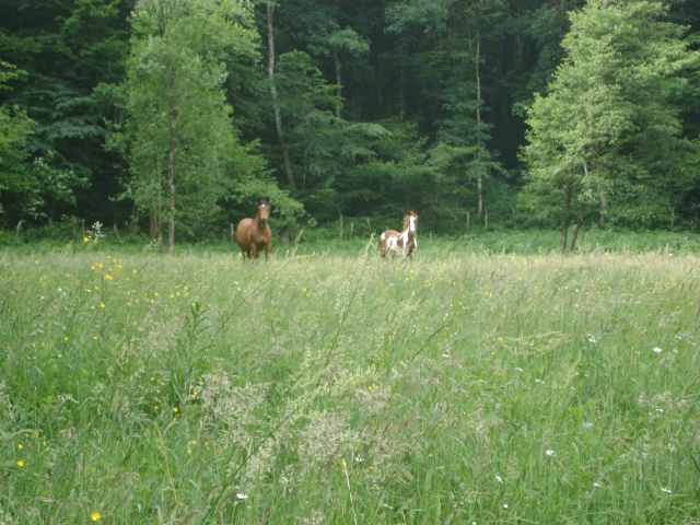 WALANIE (VANILLE) - ONC poney - adoptée en avril 2011 par voulk  - Page 4 01110