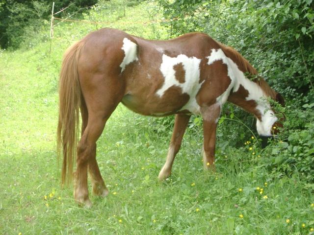 WALANIE (VANILLE) - ONC poney - adoptée en avril 2011 par voulk  - Page 4 01610