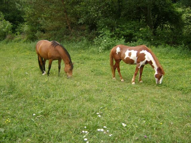 WALANIE (VANILLE) - ONC poney - adoptée en avril 2011 par voulk  - Page 4 02210