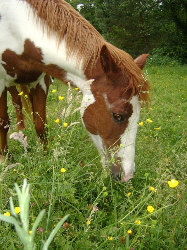 WALANIE (VANILLE) - ONC poney - adoptée en avril 2011 par voulk  - Page 4 02810