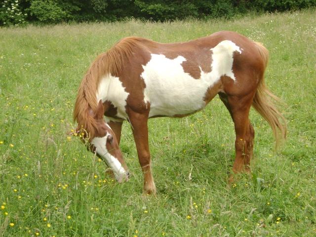 WALANIE (VANILLE) - ONC poney - adoptée en avril 2011 par voulk  - Page 4 03010