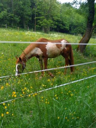 WALANIE (VANILLE) - ONC poney - adoptée en avril 2011 par voulk  - Page 4 Img_0111