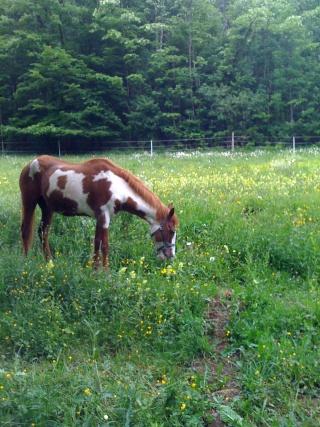 WALANIE (VANILLE) - ONC poney - adoptée en avril 2011 par voulk  - Page 4 Img_0112