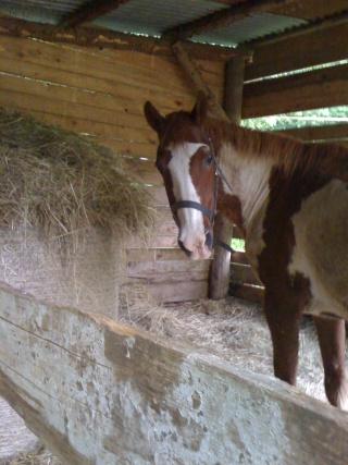 WALANIE (VANILLE) - ONC poney - adoptée en avril 2011 par voulk  - Page 4 Img_0113