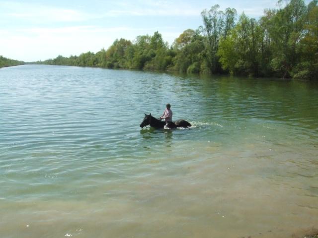 NOUVEAU CONCOURS PHOTOS : Les chevaux et l'eau - Page 2 2008_012