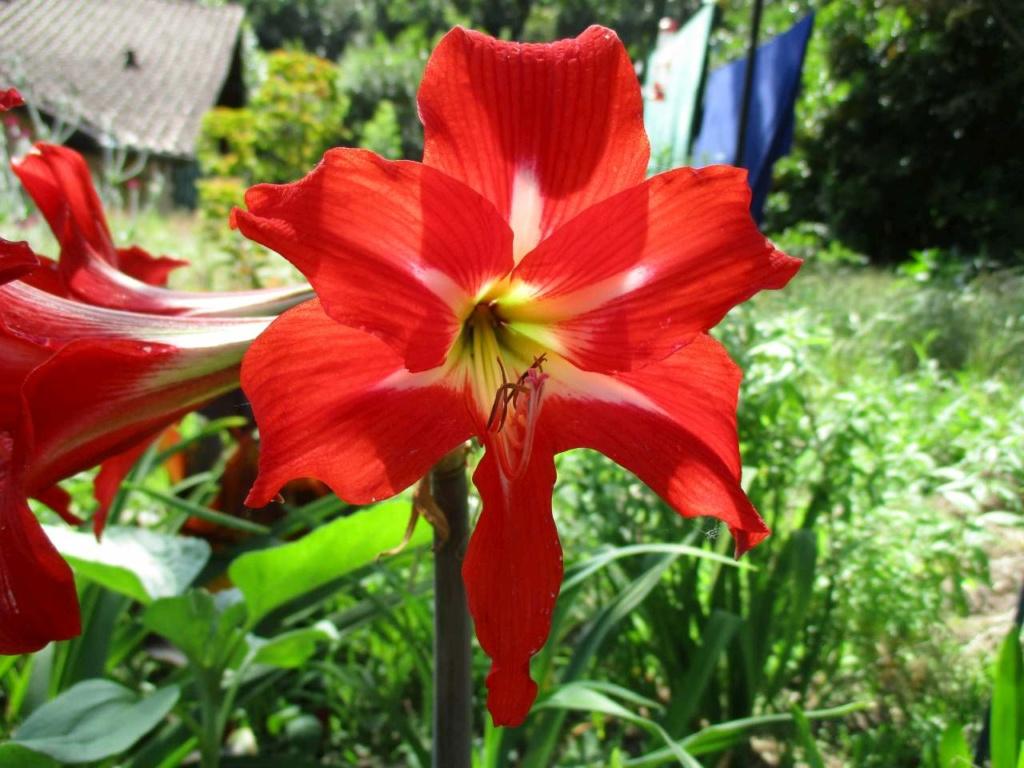 petit tour au jardin Jardin28