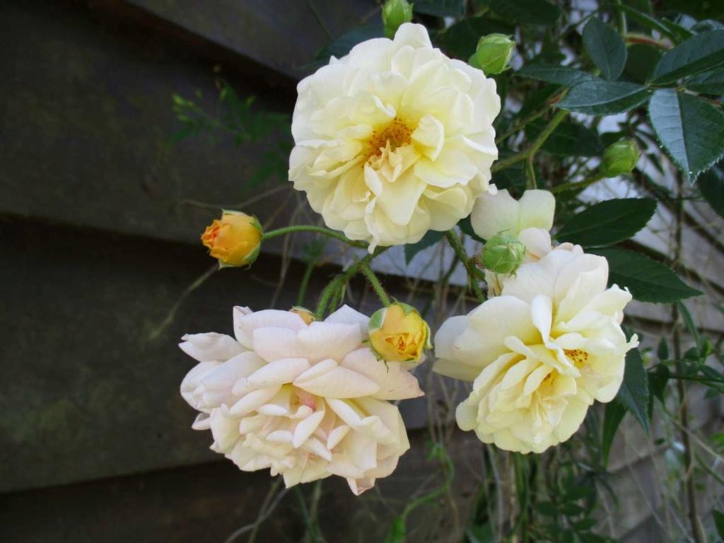 petit tour au jardin Jardin29