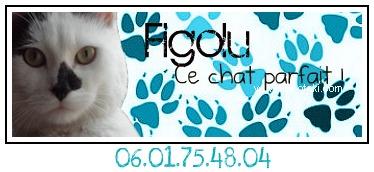 """FIGOLU rebaptisé """"PEPITO"""" mâle blanc et noir de 1 an - Page 2 Sans_t12"""