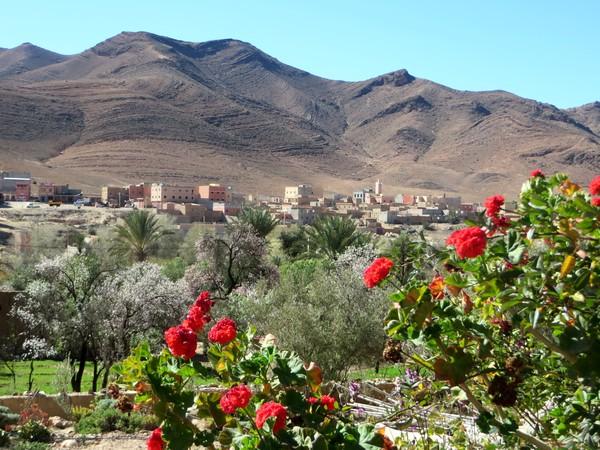 [Maroc Camp/Dernières nouvelles] TALIOUINE Camping LA BONNE ETOILE Talllo11