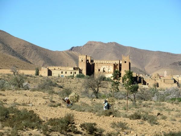 [Maroc Camp/Dernières nouvelles] TALIOUINE Camping LA BONNE ETOILE Talllo12