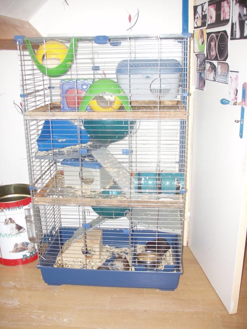 Vend trés grande cage  P1010310