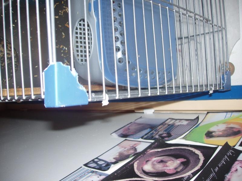 Vend trés grande cage  P1010311