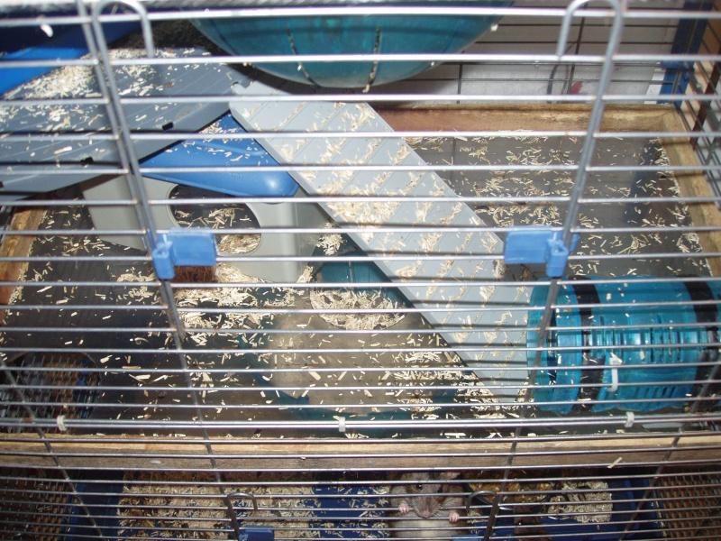 Vend trés grande cage  P1010312