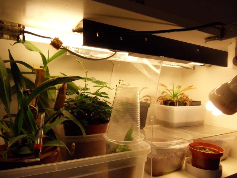 Eclairage pour culture indoor - Page 2 Sdc12712