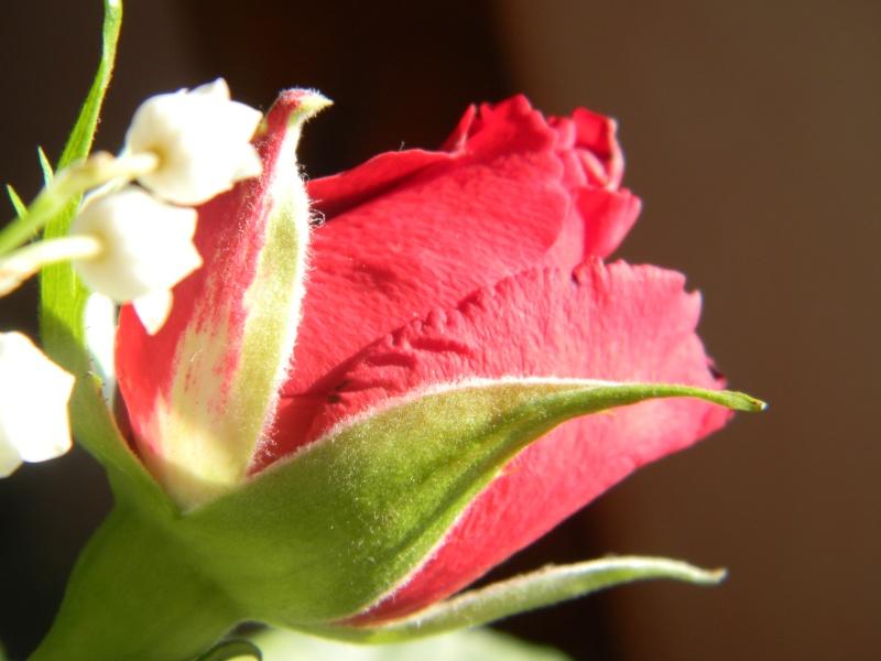 Roses :)  Dscn2910