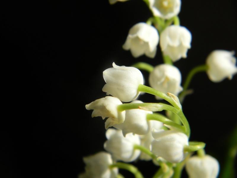 Roses :)  Dscn2912