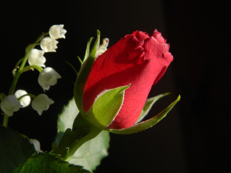 Roses :)  Dscn2913