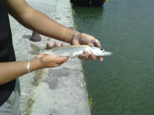 Street Fishing TOLOSA P1209110