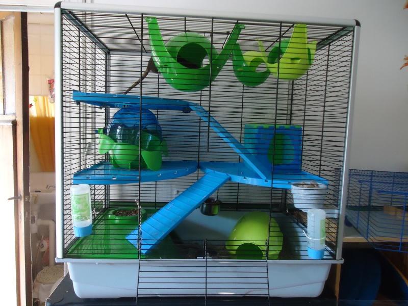 Photos de vos cages - Page 5 Dsc04713