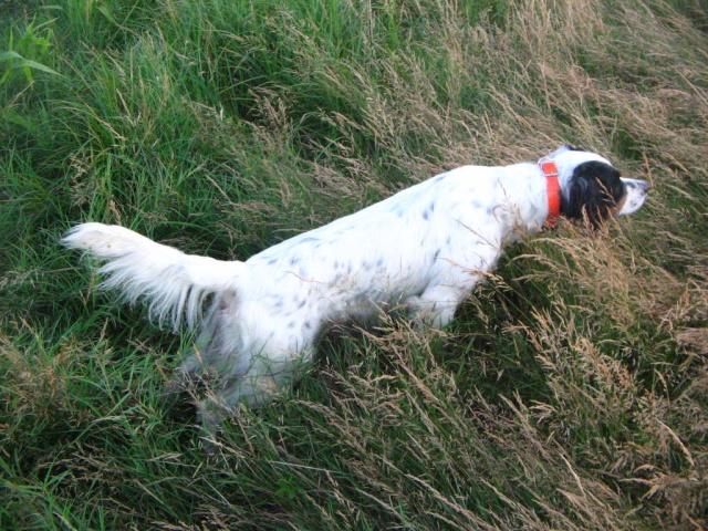 """[ """"perte ou vol"""" ] d'un chien.... - Page 6 Athos_12"""