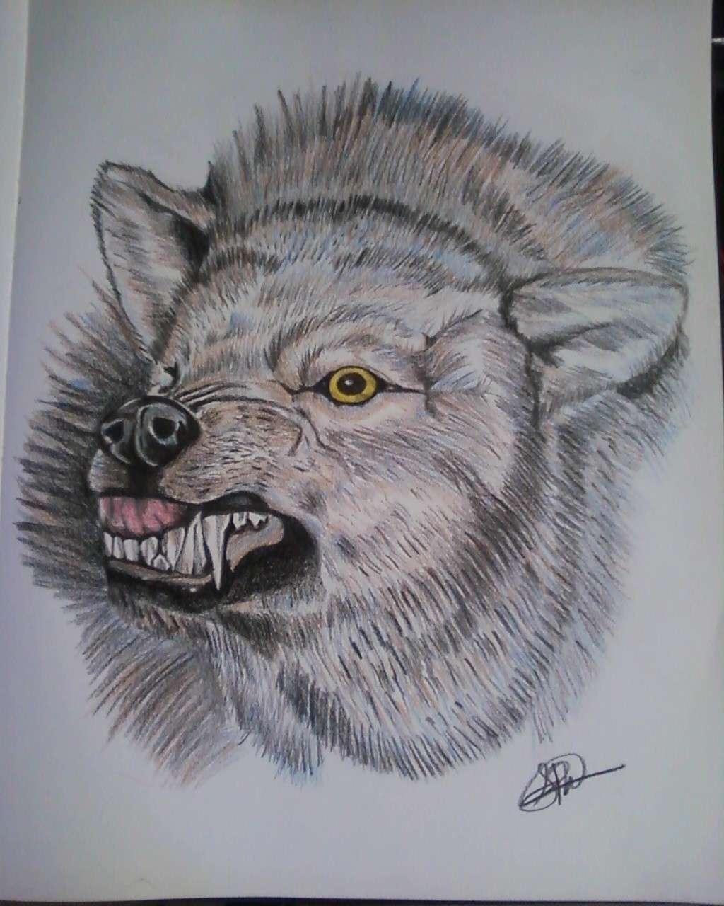 Wolf art 2011 Photo-11
