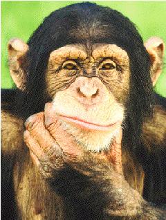 Hugues 500 D - Page 2 Chimpa10