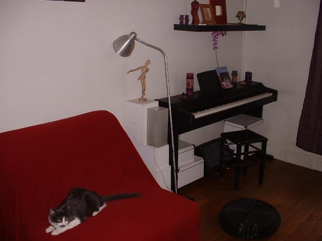 KITTY femelle grise et blanche de 1 mois  - Page 3 2011-041