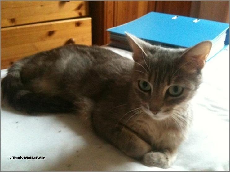 ADELIA rebaptisée FLIPPY gentille femelle de 2 ans  Adelia11