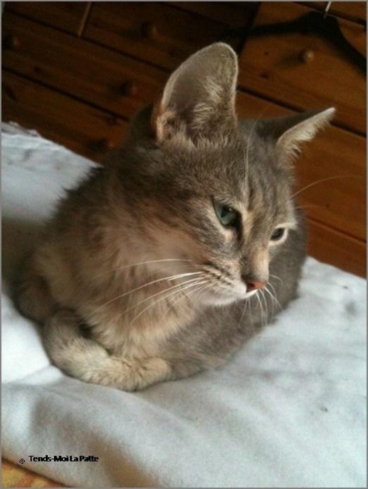 ADELIA rebaptisée FLIPPY gentille femelle de 2 ans  Adelia12