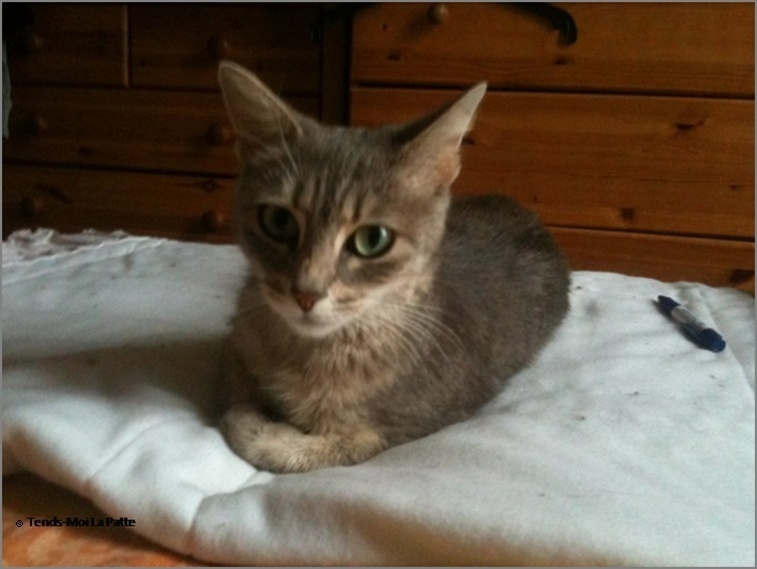 ADELIA rebaptisée FLIPPY gentille femelle de 2 ans  Adelia15