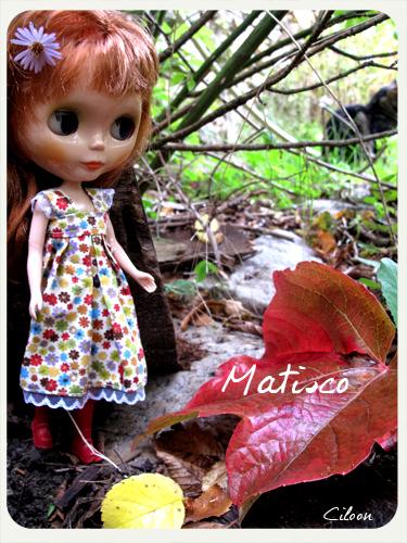 Printemps, été, automne ... et mise à jour avant l'hiver p14 Img_6710