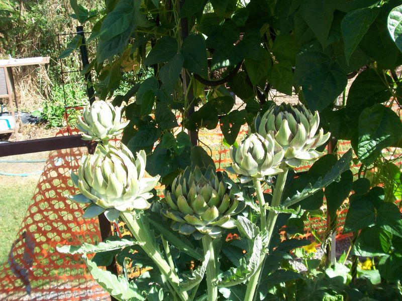 PNW Harvest 100_2610