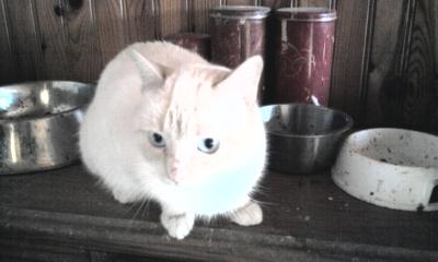 les photos de nos chats a l'adoption  Photo010