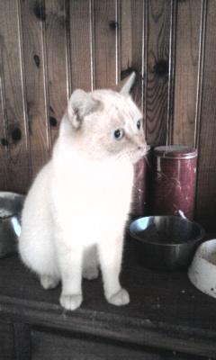 les photos de nos chats a l'adoption  Photo013