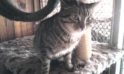 les photos de nos chats a l'adoption  Photo014