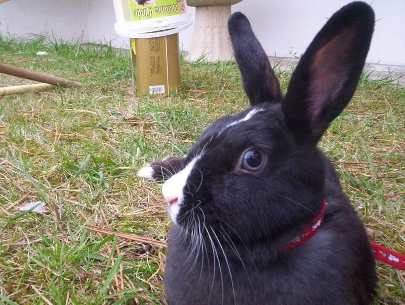 Réglisse lapine de concours =) 103_0016