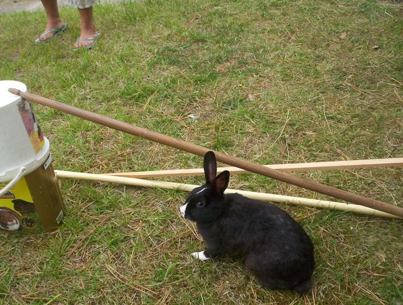 Réglisse lapine de concours =) 103_0020
