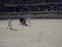 Les grand jeux romains de Nîmes 2011 Dsc02361