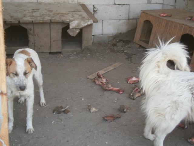 fata - FATA, née le 12/06/2009, arrivée chiot au refuge (soeur de Mickey et fille de Tara) - en FA dans le 49 - GARANT - SOS -R-FB-SC-30MA P4230111