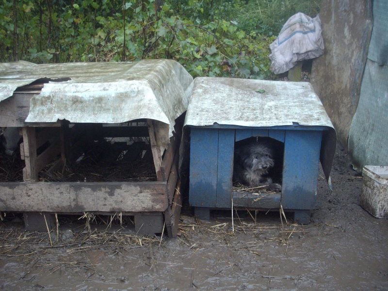 BOXES POUR LE REFUGE DE LENUTA - ENCORE 40 CHIENS SANS ABRIS - Page 7 Poze_133