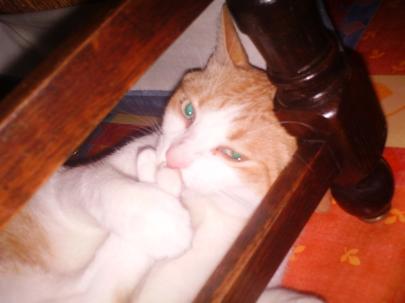 Abandon d'un joli chaton Rouky_10
