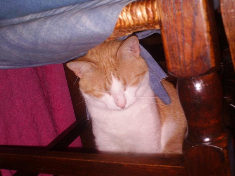 Abandon d'un joli chaton Rouky_11