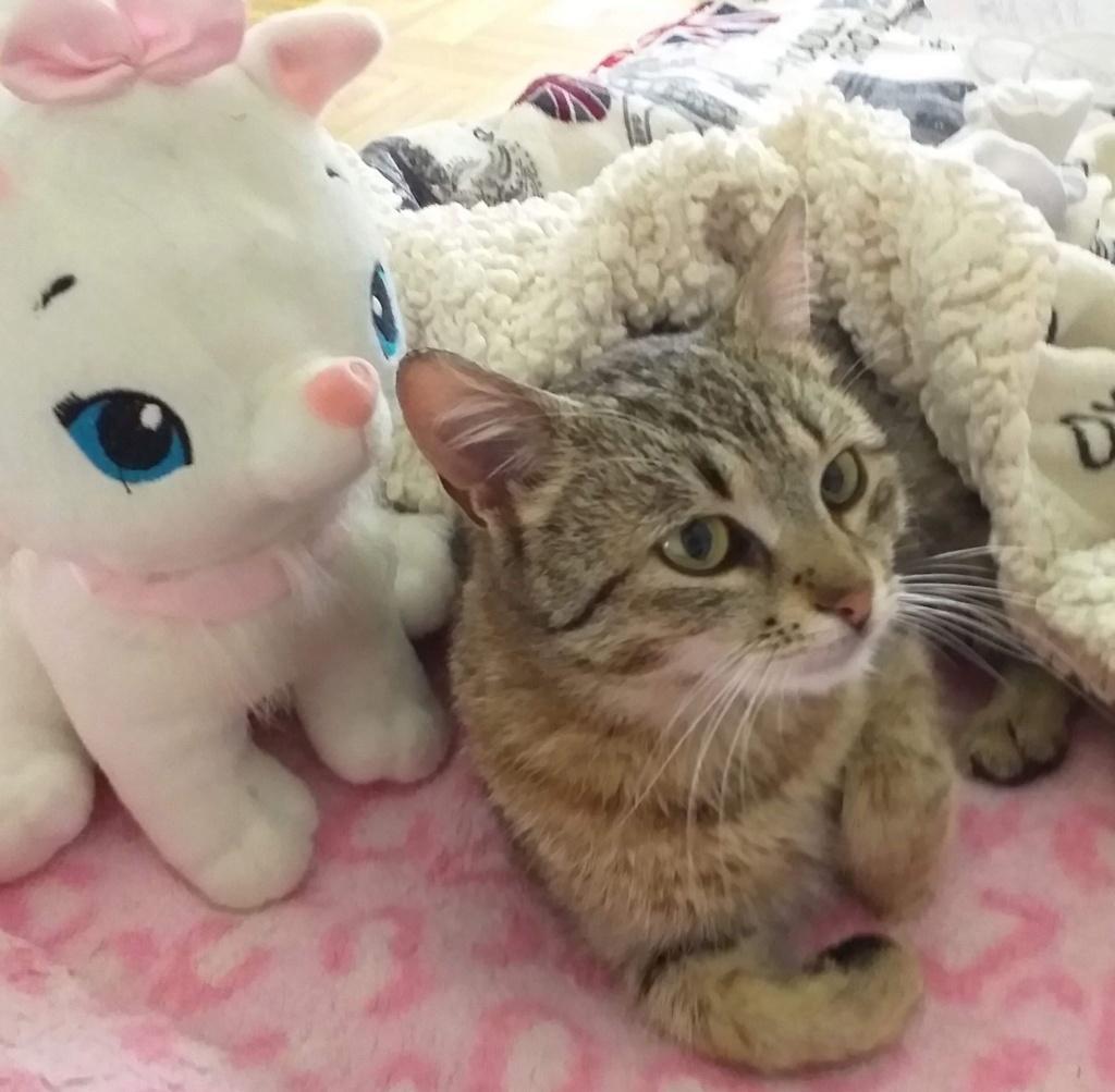 SARA, chatte, tigrée, née 2016 (ORASTIE) Prise en charge SPA de Pontarlier 60570111