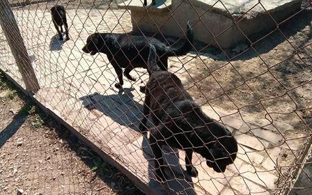 LEPA, F-X, née 2013 (BELLA) chienne dynamique -  Prise en charge Association GALIA - Page 4 94583411
