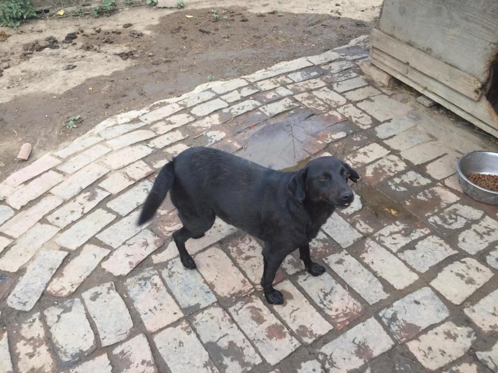 camila - CAMILA - Née 2015- 11 kg - Douce,  tout à apprendre (BELLA) - PEUT ARRIVER  - Page 6 Camila12