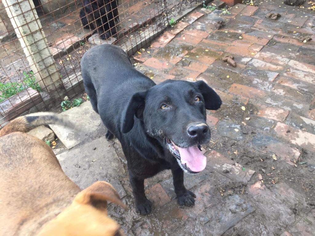 LEPA, F-X, née 2013 (BELLA) chienne dynamique -  Prise en charge Association GALIA - Page 4 Lepa10
